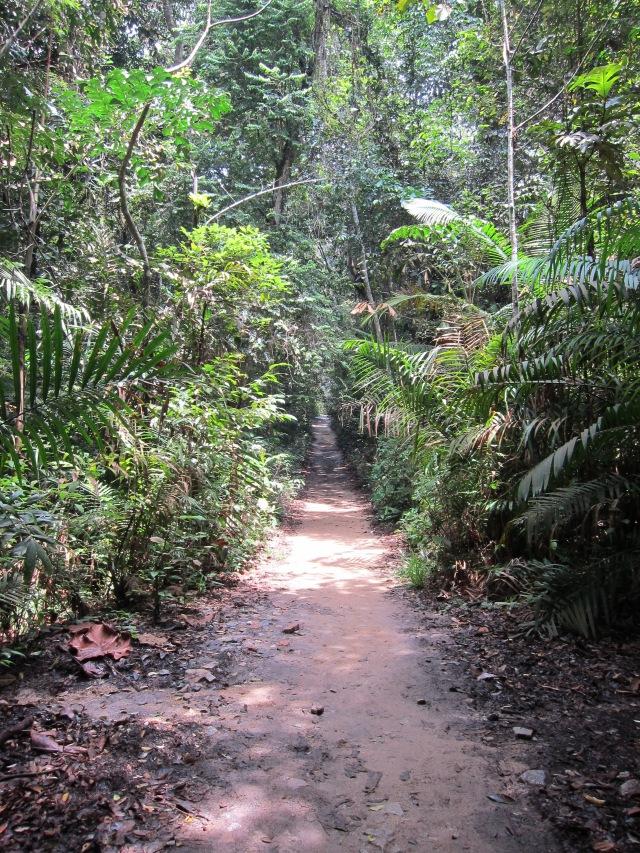 Rainforest Ramble